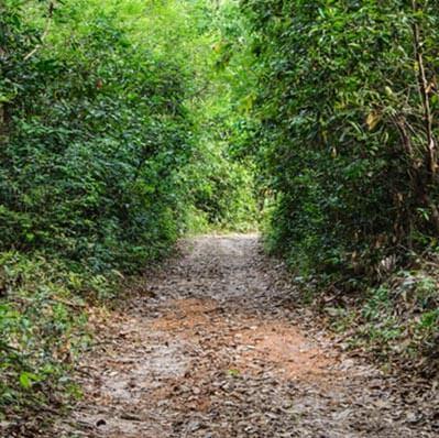 Emerald-Woods