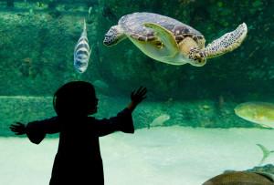 NC Aquarium Near Emerald Isle