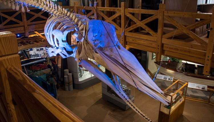Learn about maritime history at the North Carolina Maritime Museum