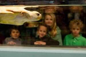 Aquarium otters, turtles, birds