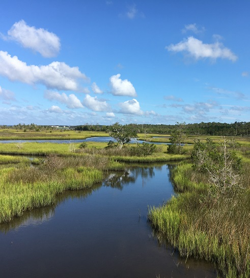 Scenic views at Croatan National Forest