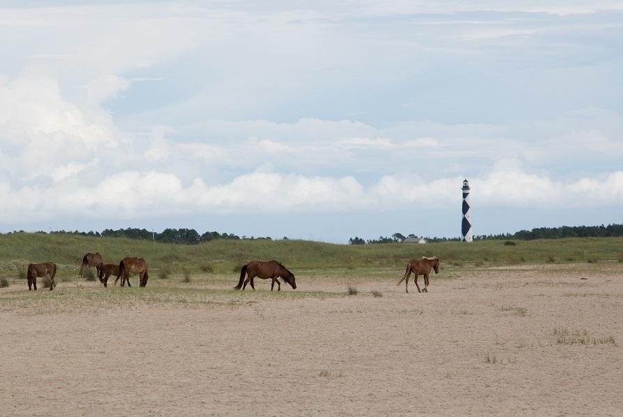 Wild Horses on Cape Lookout National Seashore
