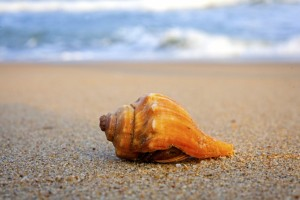 Shelling and Crafts 2