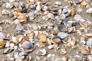 Shelling and Crafts 3