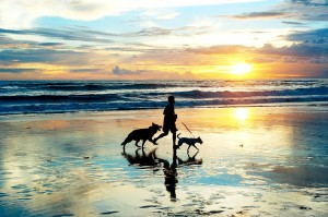 Pet Friendly on Emerald Isle