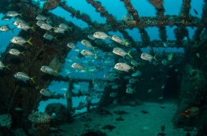 Normannia - Popular Shipwreck Diving Spots on the North Carolina Coast