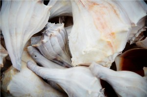 Sea Shells on Emerald Isle Beach