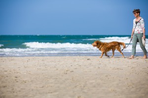 Pet Friendly Rentals in Emerald Isle NC
