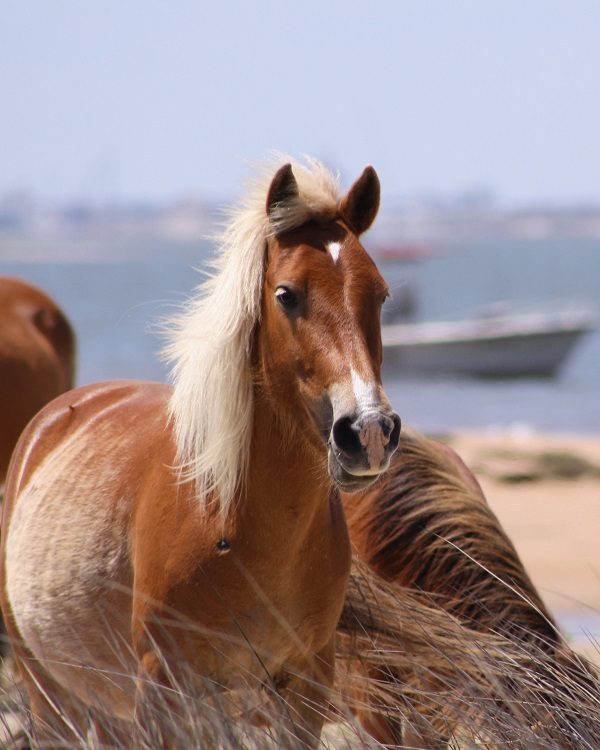 Wild Horse Watching with Crystal Coast Ecotours