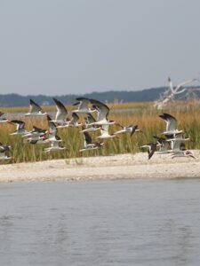 Crystal Coast Ecotours - Birdwatching