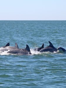 Crystal Coast Ecotours - Dolphin Watching