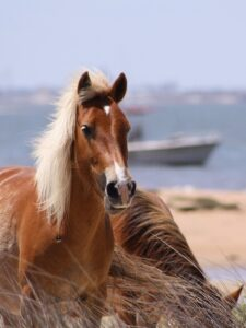 Crystal Coast Ecotours - Wild Horse Watching