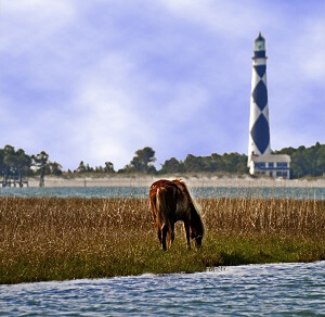 Shackleford Banks & Cape Lookout Lighthouse