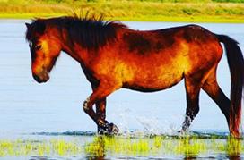 Wild Horses 272x179