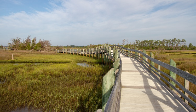 Hiking trail at Croatan National Forest