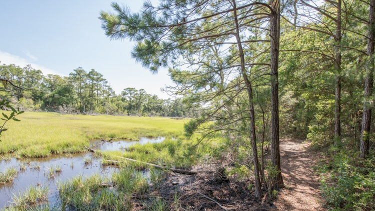 Explore nature's beauty on area walking and biking trails