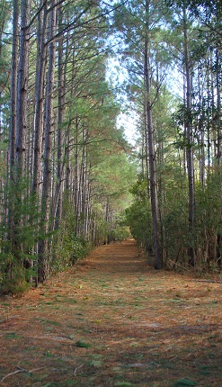 Explore nature trails this fall in Emerald Isle