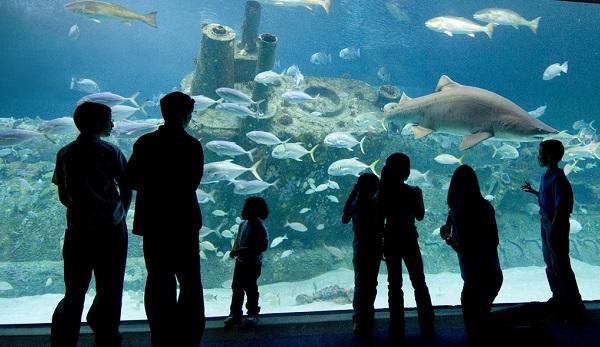Go on an underwater adventure at the North Carolina Aquarium
