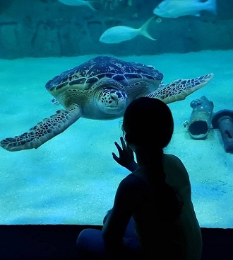 Turtle at the North Carolina Aquarium