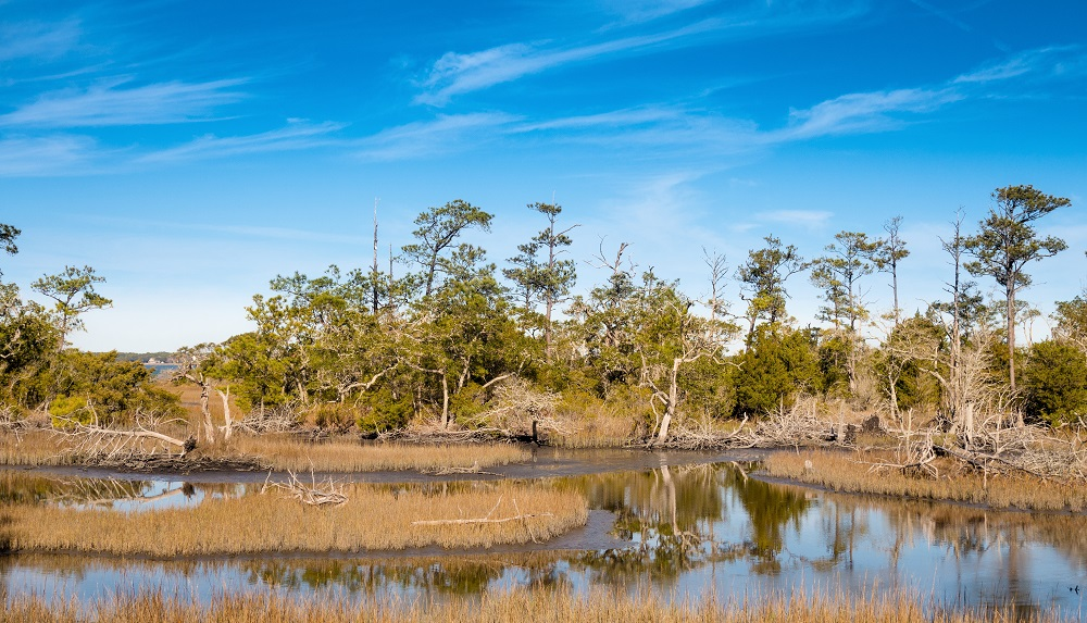 Maritime forest in Pine Knoll Shores - Pet Friendly Things to Do on NC's Crystal Coast