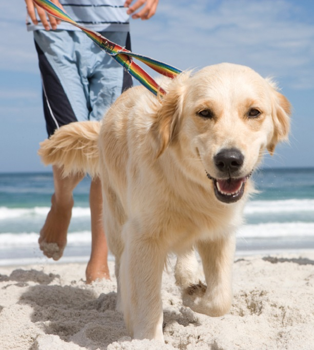 Pet Friendly Things to Do in Emerald Isle, NC