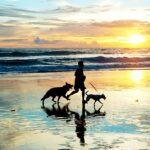 Best Pet Friendly Vacations on North Carolina's Crystal Coast