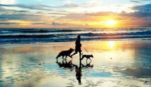 Best Pet Friendly Vacations on North Carolina's Crystal Coast