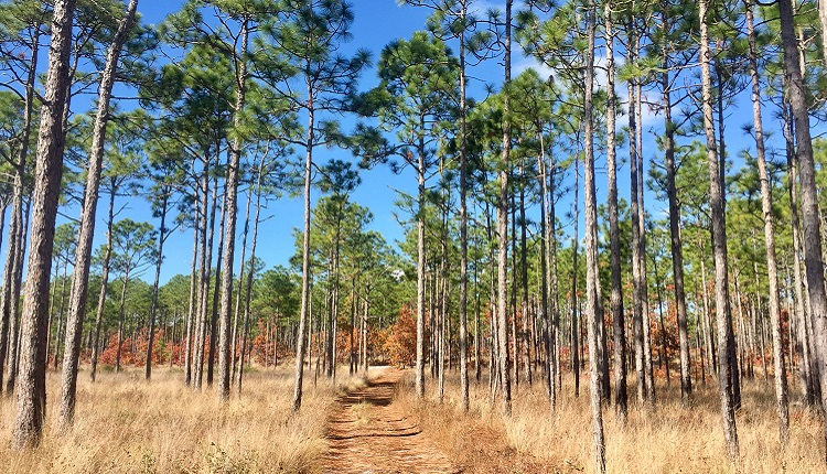 Hiking in Croatan National Forest