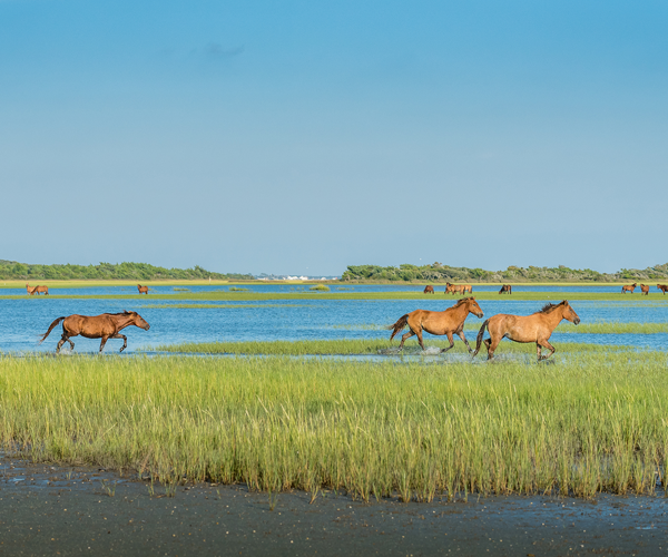 Where to Go for a Couple's Weekend Getaway in North Carolina - Beaufort Horses