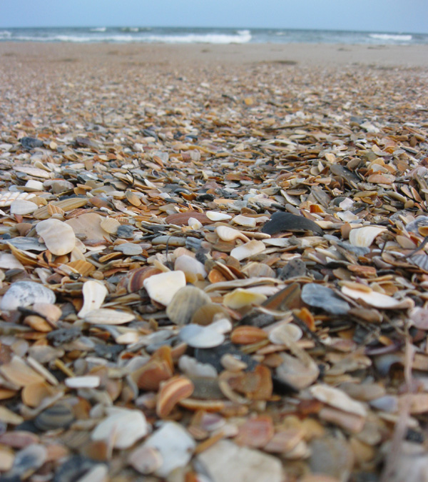 Best Shelling Beaches in North Carolina's Outer Banks - Beach Shells