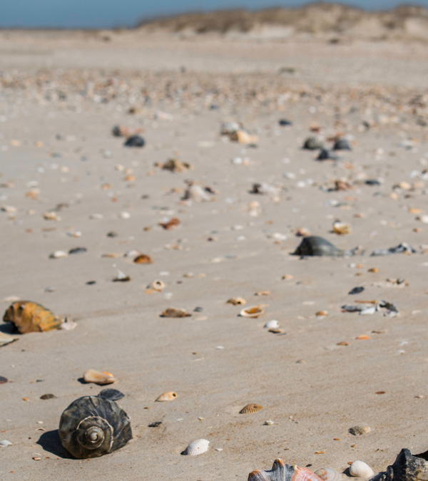 Best Shelling Beaches in North Carolina's Outer Banks - Cape Lookout