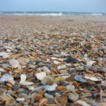 Best Shelling Beaches in North Carolina's Outer Banks
