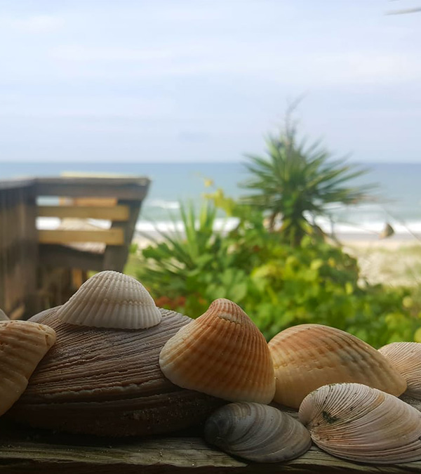Best Shelling Beaches in North Carolina's Outer Banks - Rental Shells