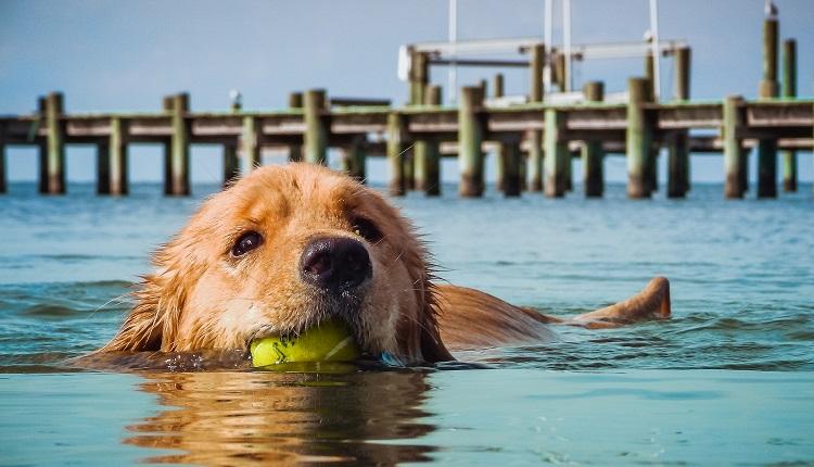 Pet Friendly Rentals in Emerald Isle, NC