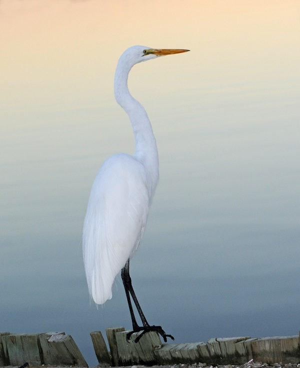 Best Birding Trails in Emerald Isle NC