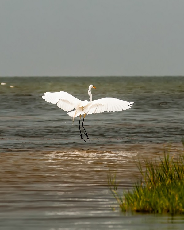 Birding on Cedar Island, NC