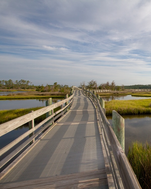 Boardwalk at Croatan National Forest
