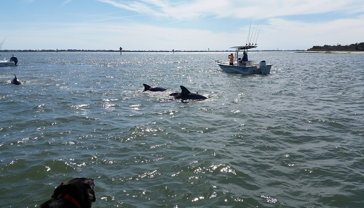 Take a scenic boat ride with H2O Captain to see pods of dolphins swimming
