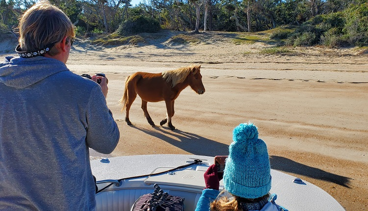 Enjoy a private boat tour with H2O Captain to see the wild horses