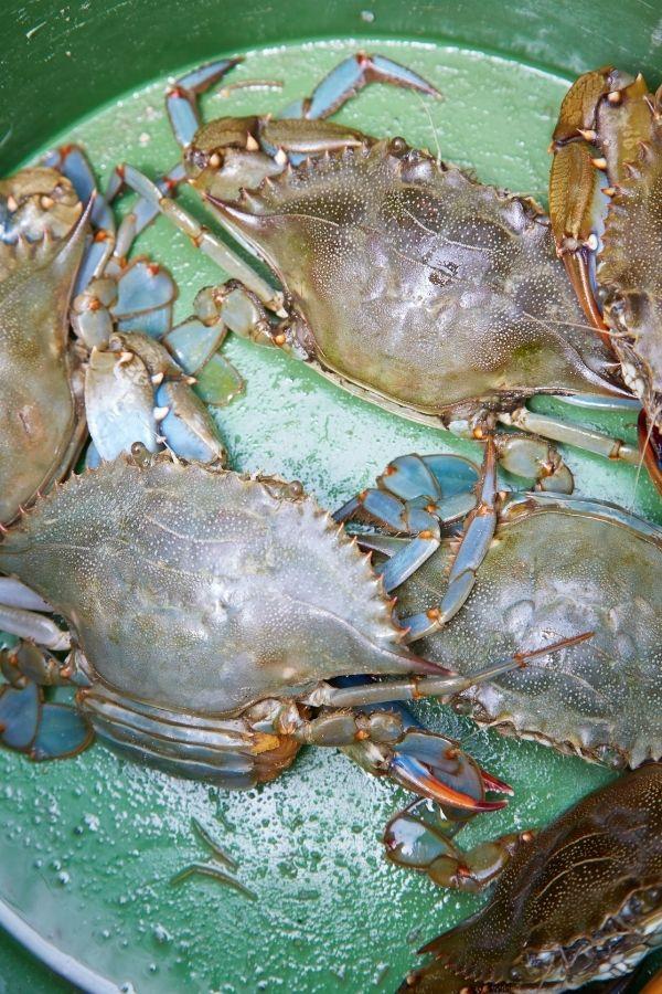 Crabbing in Emerald Isle