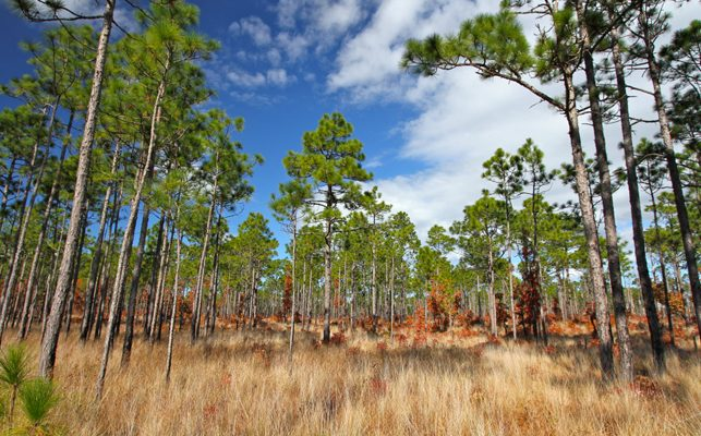 Summer Day Trip Ideas from Emerald Isle - Croatan National Forest