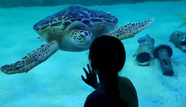 Best Things to Do During the Holidays on North Carolina's Crystal Coast - Aquarium