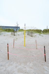 Sea Turtle Nesting Season at Emerald Isle NC Beaches