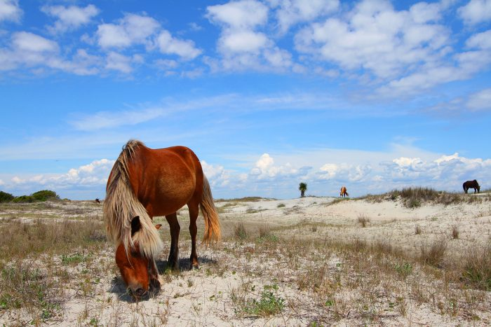 Emerald Isle Activities - Shackleford Banks