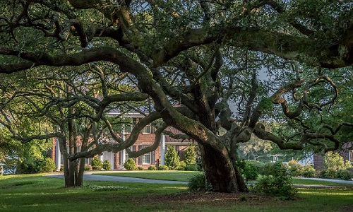 Beaufort Old Homes and Gardens Tour