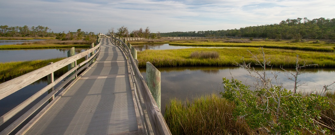 Boardwalk in Croatan National Forest near New Bern NC