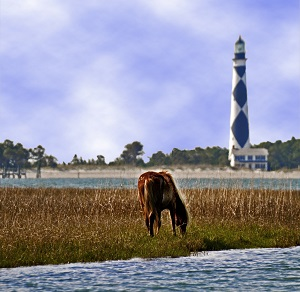 Wild Horses near Cape Lookout Lighthouse
