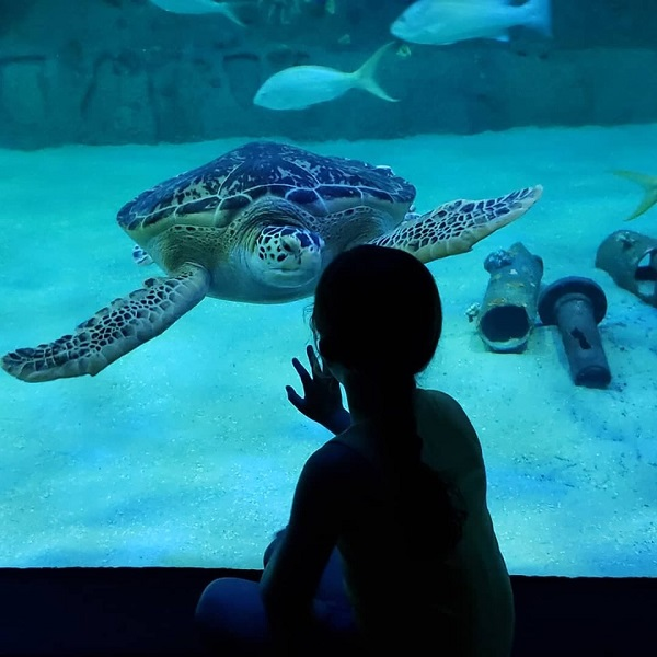 Turtle at NC Aquarium in Pine Knoll Shores NC