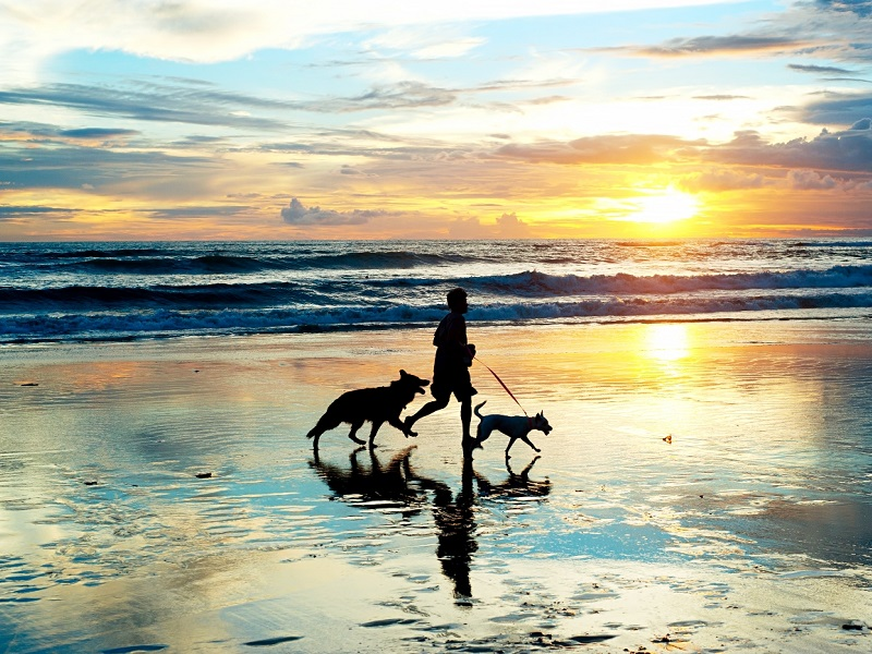 pet friendly vacations in emerald isle nc