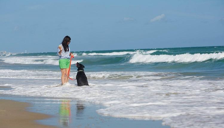 Pet Friendly Beaches in Emerald Isle NC